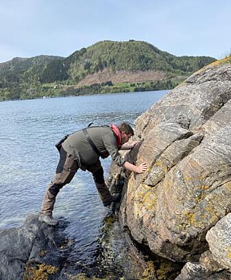 Blant Vestlandets gneiser registrerer vi mineraler, bergarter og strukturer i berget.