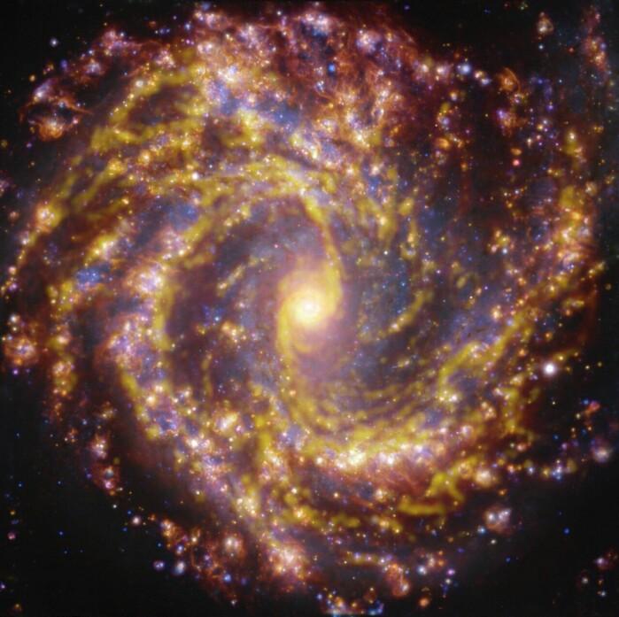 Den gule fargen viser hvor gasskyer, råmaterialet for stjerner, befinner seg i denne galaksen. Den gullaktige gløden viser hvor det finnes nyfødte stjerner. De blå fargetonene viser litt eldre stjerner.