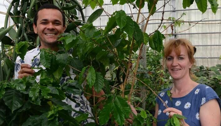 Marcel Moura og Charlotte Sletten Bjorå anbefaler en god kaffemaskin som arbeidsmiljøtiltak. Her med kaffeplanter i Botanisk hage i Oslo.