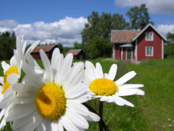 """""""At de nordiske landene er så effektive, produktive, konkurranse- og omstillingsdyktige strider imot konvensjonelle økonomiske teorier.(Illustrasjonsfoto: iStockphoto)"""""""