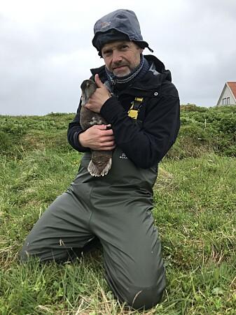Når ea, ærfuglhunnen, er fanget, registerer forskerne vekt, vingelengde og størrelse på hode og fot.