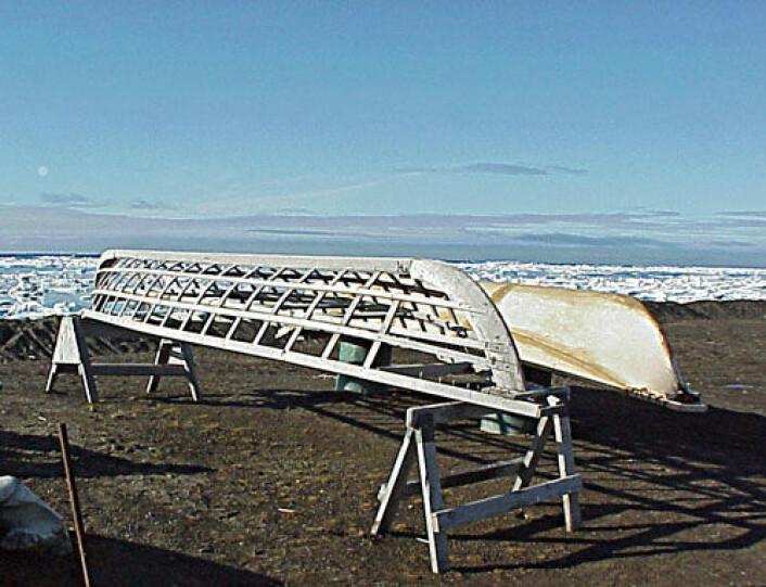 Umiak er en båttype som brukes av urfolk i Nord-Amerika. Bildet viser en umiak med treskjelett (nærmest) og en trukket med skinn (bak). Bildet er tatt i Barrow, Alaska. Lignende båter kan ha blitt brukt mange tusen år tilbake. (Foto: Floyd Davidson/Wikipedia Commons)