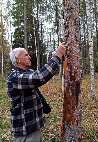 Åke Lindelöw (bildet) og Torstein Kvamme har vært på mange turer sammen for å lete etter interessante barkbiller.