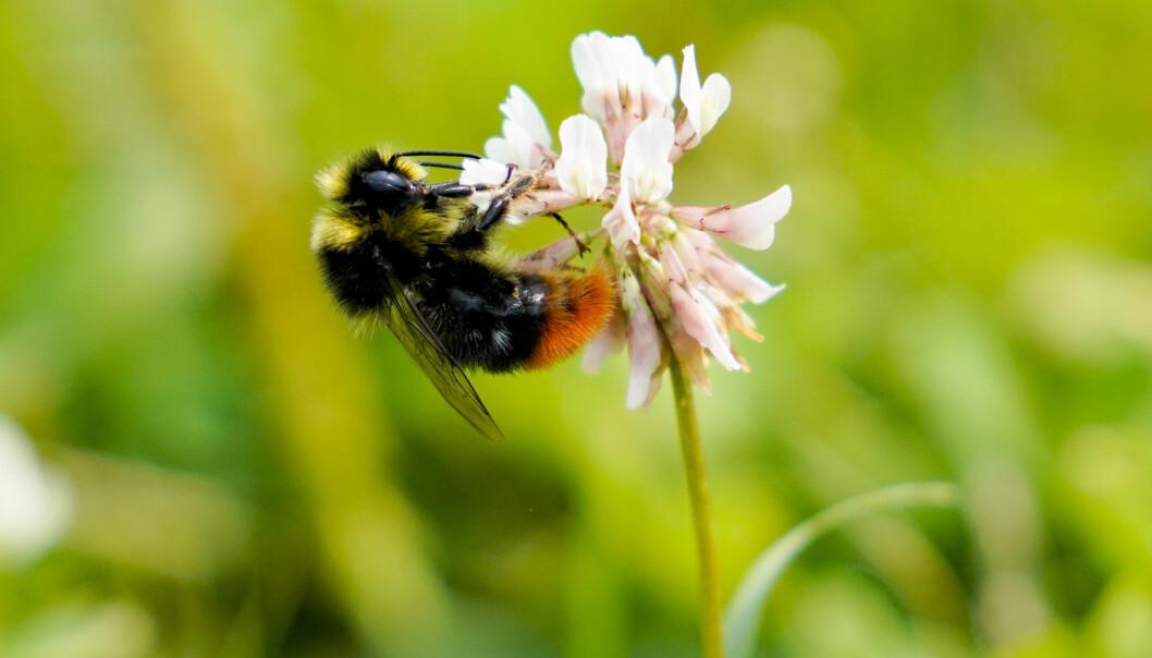 Humler er spesielt nyttige til pollinering av blomster der bier ikke strekker til. De fleste humlearter har så lang tunge at de kan nå ned gjennom for eksempel kløverblomstens kronrør, mens det bare er enkelte raser av honningbien som kan klare dette.
