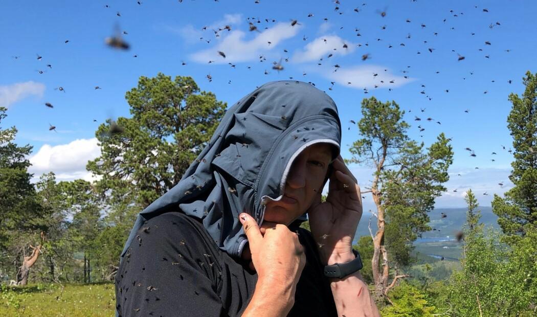 Er det mye fluer, klegg, mygg og knott i år?