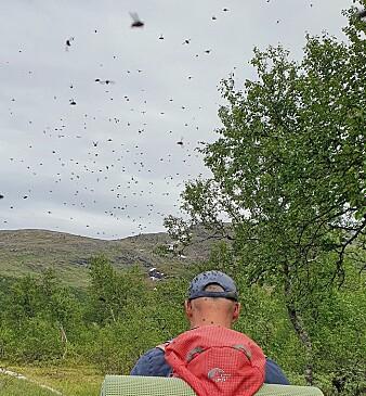 Fluenes herre? Fra Hemnes i Nordland, sommeren 2021.