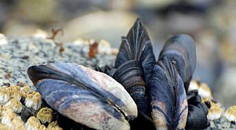 Fråtset i sjømat på steinaldervis