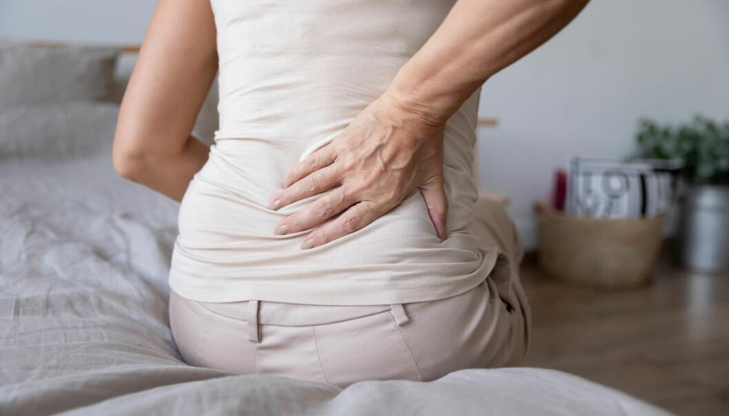Kan kroppens immunsystem stå bak smertene hos mennesker med fibromyalgi? Studier på mus antyder det