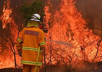 Skogbranner hadde mer å si for klimaet enn korona-pandemien