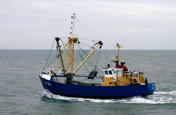 Fiskere i den sørlige delen av Nordsjøen finner fossiler på havets bunn. (Illustrasjonsfoto: Hans Hillewaert/Wikimedia Commons)