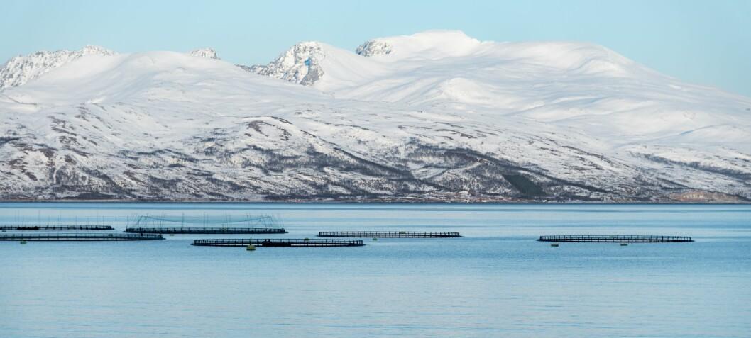 – Uten vaksinene hadde norsk fiskeoppdrett sett helt annerledes ut