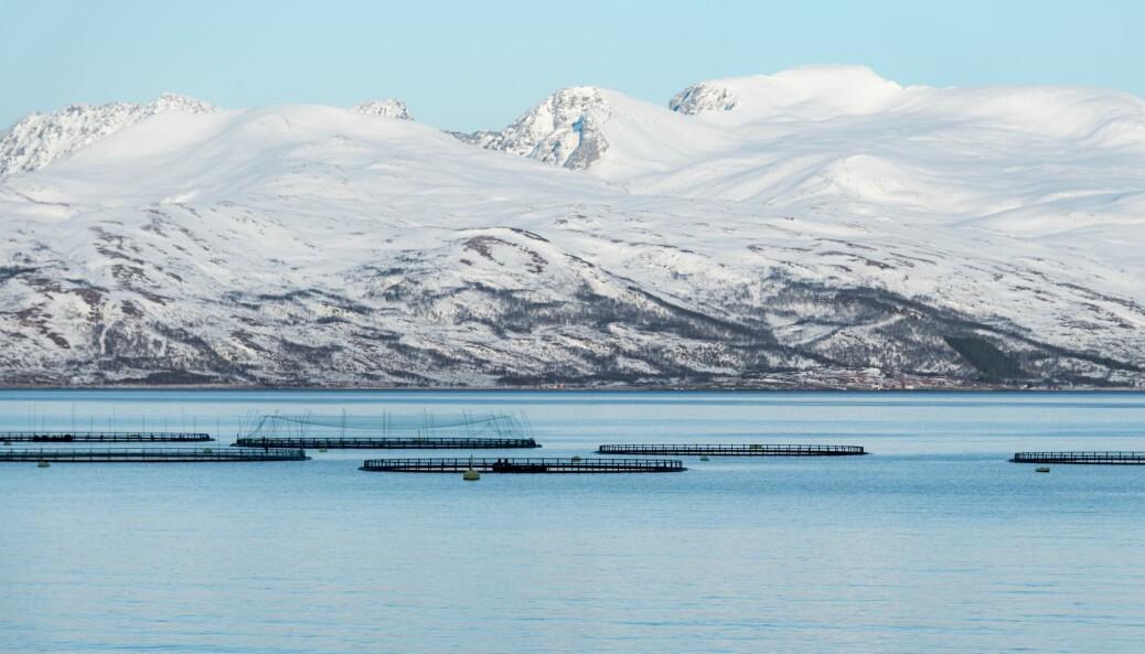 Ny teknologi kan i fremtiden gjøre det mulig å plassere oppdrettsanleggene lengre ut til sjøs, såkalt «offshore farming».