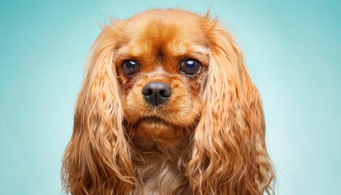 Hunder følger nøye med på oss, forteller forsker.