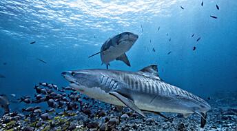 Haier jakter på skift for ikke å bli utkonkurrert