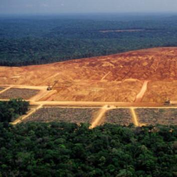 Når regnskog konverteres til jordbruksområder frigjøres store mengder karbon fra jordsmonnet og vegetasjonen.(Illustrasjonsfoto: iStockphoto)