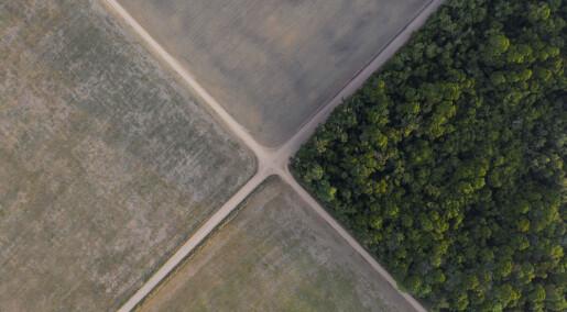 Amazonas: Kraftig avskogede områder vokser minst. Men noen land er bedre enn andre