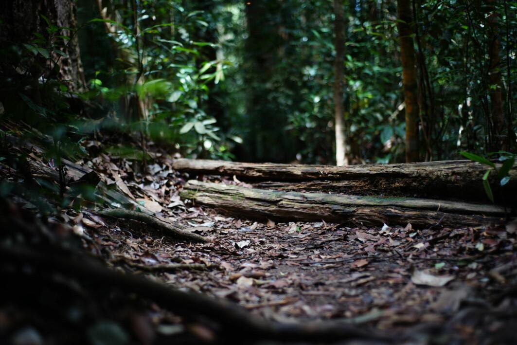 Hvis du har frykt for bakterier, er sterile overflater en kortsiktig løsning. Skogbunn, derimot ...