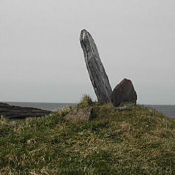 Dekkhella fra en gravrøys på Fleinvær er reist opp og brukes som seilingsmerke. (Foto: Lise Brekmoe/Børge Evensen)