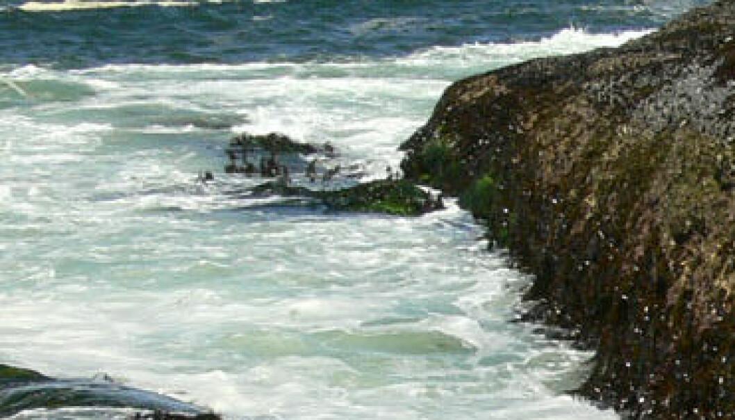 Surere tilværelse i havet
