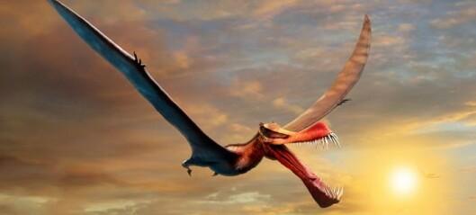 Det ser ut som en drage. Men den fantes på ekte i dinosaurtiden!