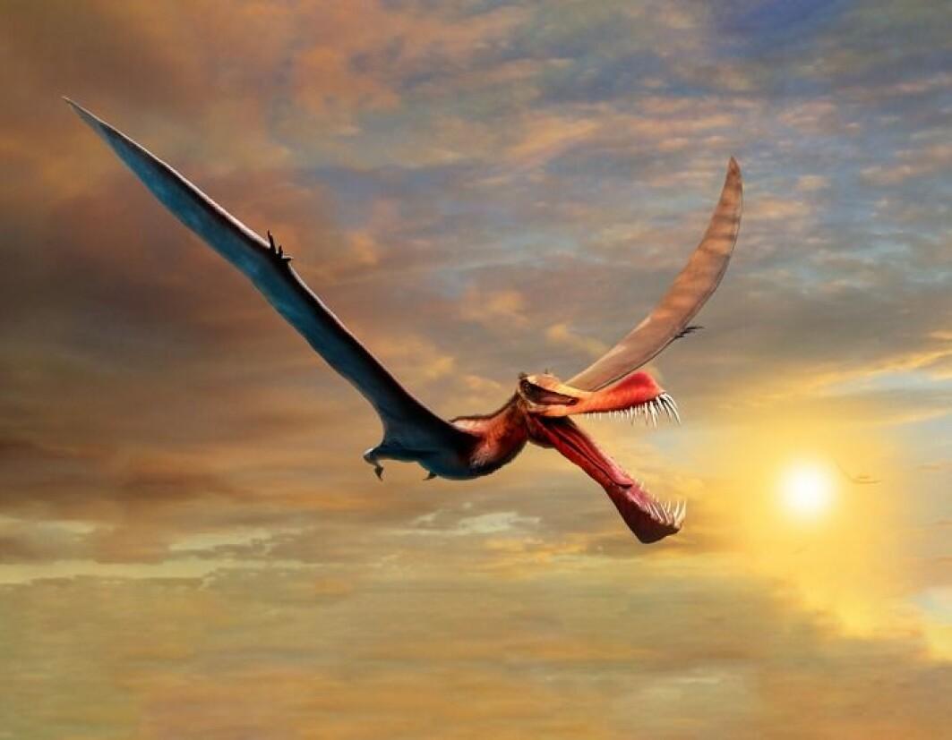 Denne flyveøgla flakset rundt for mer enn hundre millioner år siden.