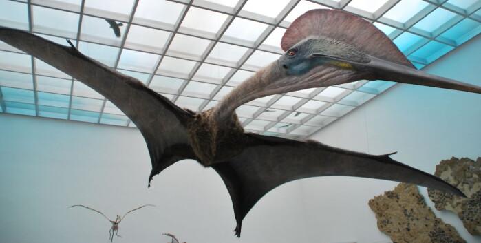 Slik trodde forskerne at den enorme Hatzegopteryx så ut før. Denne bor på et museum i Tyskland.