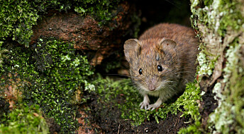 Klimaendringene øker risikoen for at dyresykdommer smittes til mennesker