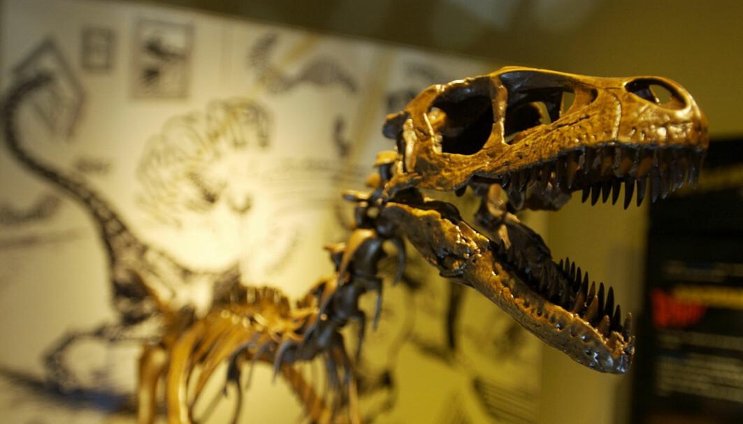 Tyrannosaurus rex er kanskje den aller mest kjente dinosauren. På Naturhistorisk museum har de en kopi av et skjelett. Den heter Stan.