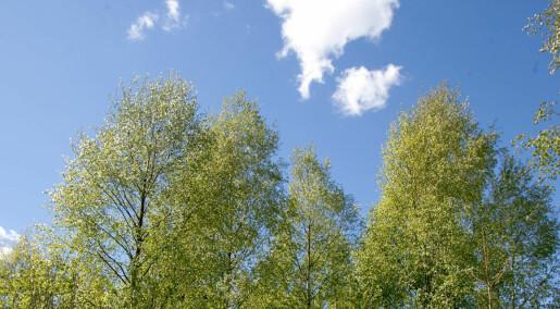Modell for skogens CO2-regnskap