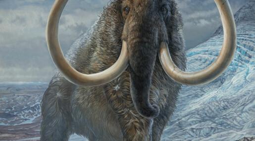 Forskere har kartlagt mammutens vandringer gjennom Alaska