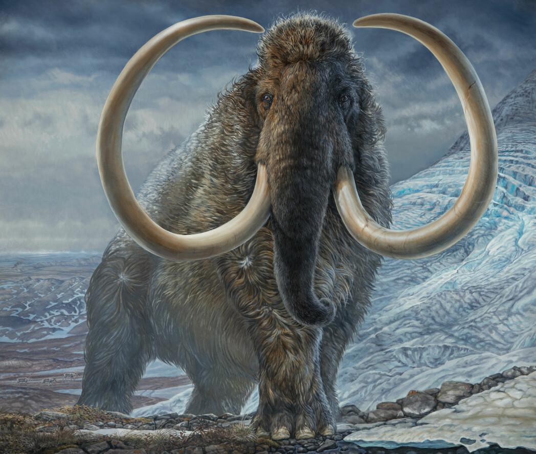 Illustrasjon av en voksen ullhåret mammut.