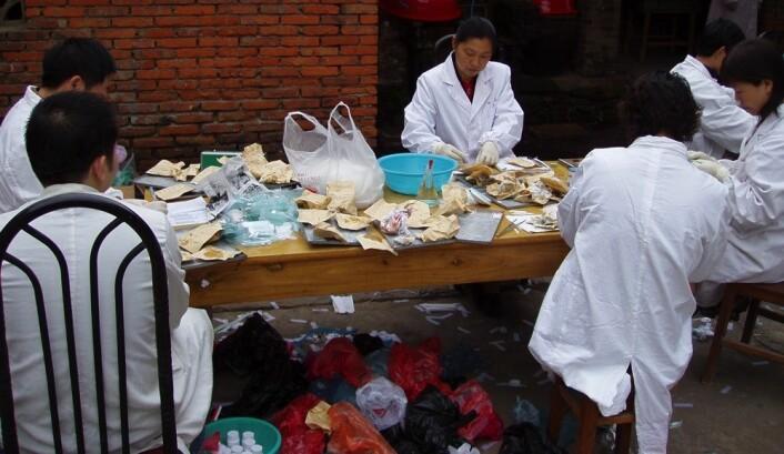 Forskningsteamet analyserer over 1700 avføringsprøver i Anhuiprovinsen i Kina. Avføringsprøvene kom i små brune papirposer. På grunn av varmen og mangel på egnede laboratorier ble mesteparten av denne jobben gjort utendørs. (Foto: Tore Lier)