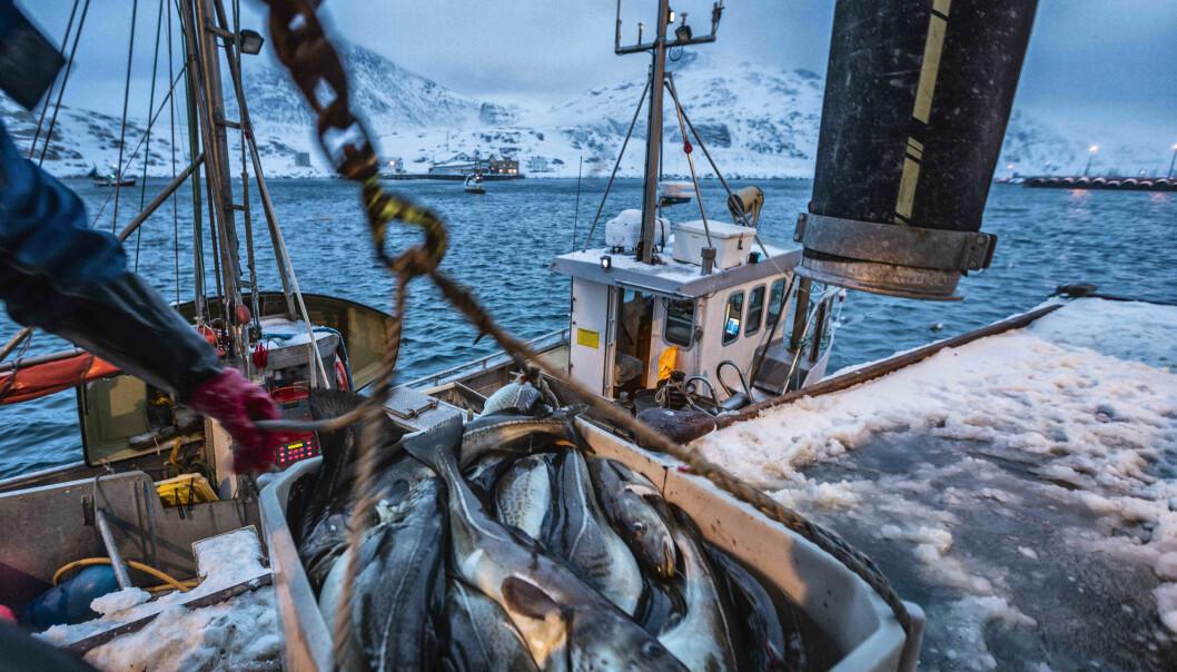 Bak den gode fangsten av skrei skjuler det seg et tydelig bilde på hva klimaendringer fører til.