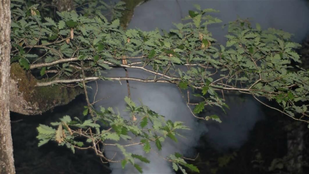 Siden 1990-tallet har forskere tatt i bruk gass for å kartlegge livet øverst i trekronene, også i norske skoger.