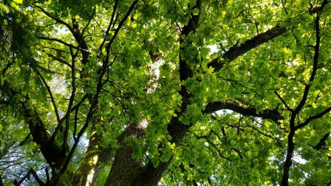 Eikeskogen i Norge har lenge vært kjent som et svært viktig leveområde for en mengde ulike arter.