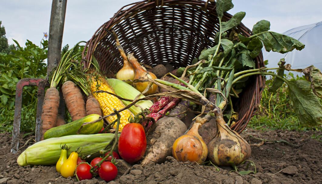 Grønnsaker er sunt, men er økologiske grønnsaker ekstra sunne?