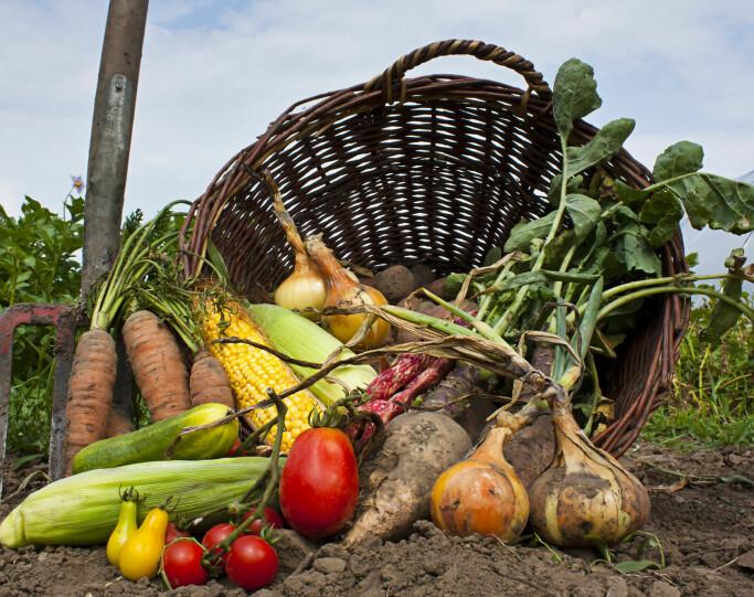 Er økologisk mat sunnere enn annen mat?