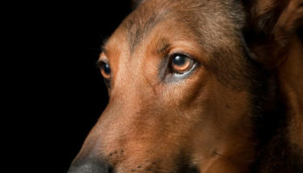Hund lukter kreft
