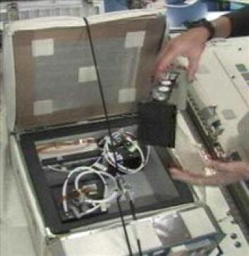 Edderkoppenes lille habitat (svart boks) pakkes ut på romstasjonen. (Foto: NASA)