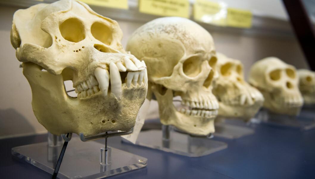 Darwins evolusjonsteori er har stått stødig i vitenskapen lenge. Mange amerikanere har imidlertid vært skeptiske.
