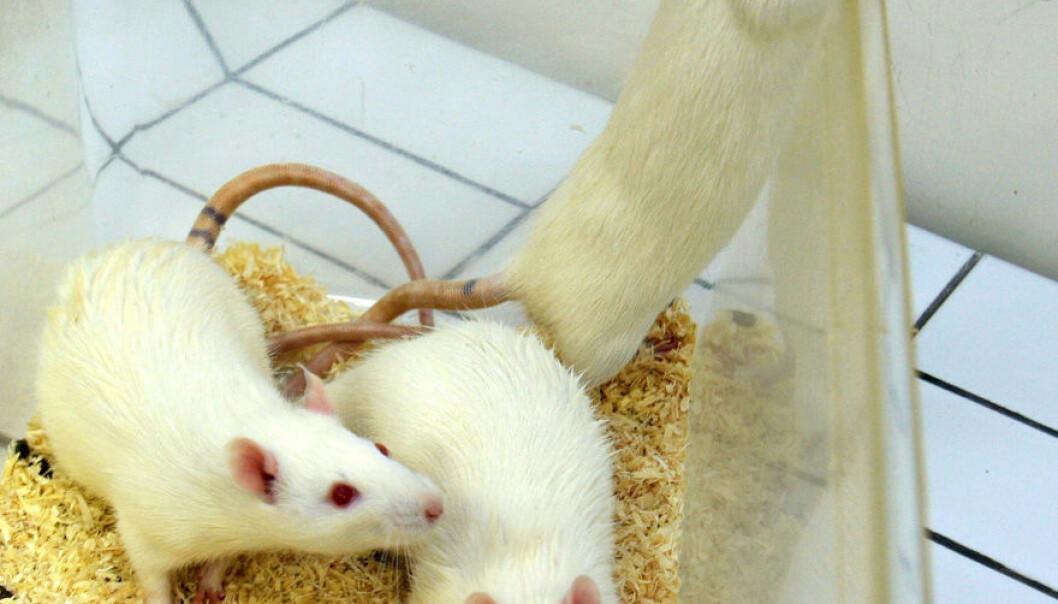 - Dyre dyreforsøk gir få resultater