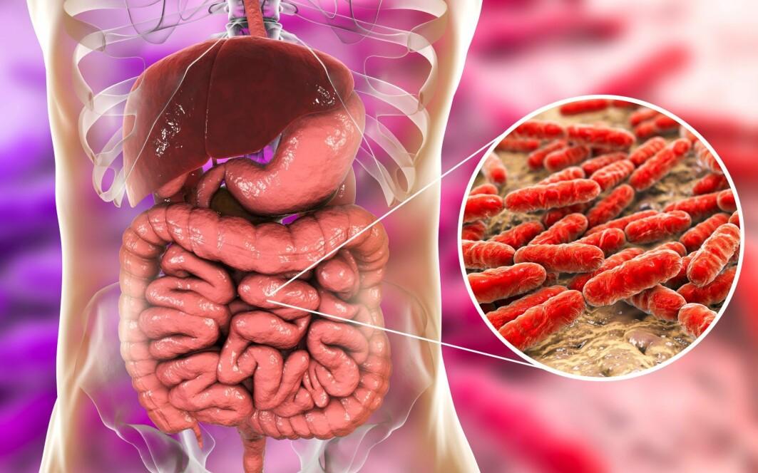 I den nye databasen har forskerne sammenlignet arvematerialet til nesten en halv million bakterier med informasjon om mikrobiomet i tarmen til 3500 friske mennesker over hele verden.