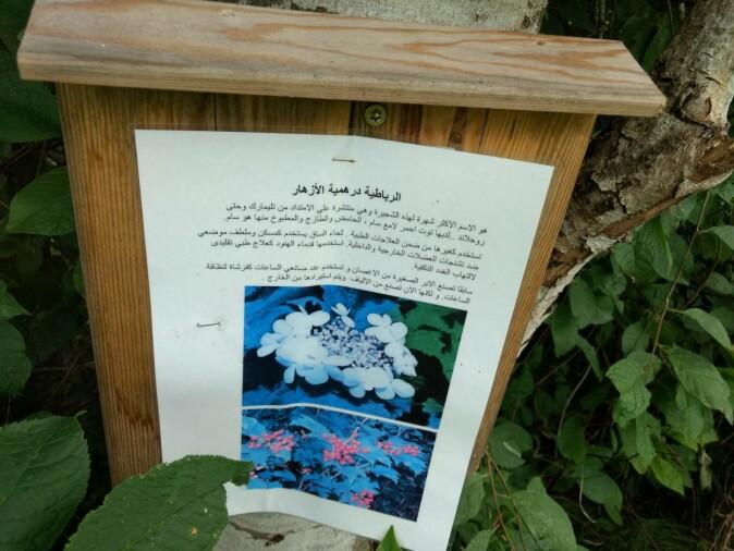 Et bilde fra en kultursti arrangert i en av kommunene han brukte hvor det stod skrevet om blomster og slikt på både norsk og arabisk.