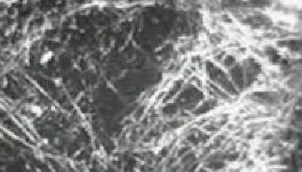 De første dagene i rommet var edderkoppnettet et eneste stort sammensurium. (Foto: NASA)