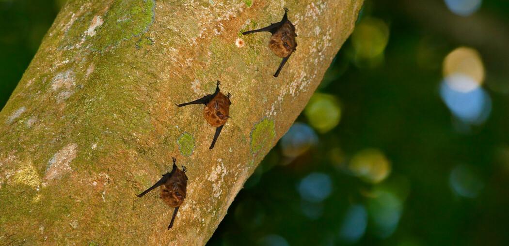 Flaggermus-unger lærer å kommunisere ved å bable