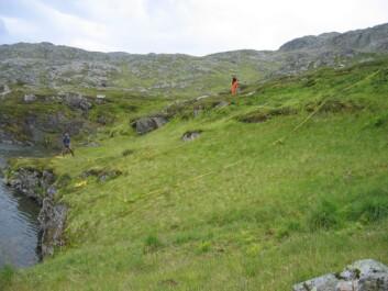 Det ble gjennomført et omfattende feltarbeid for å studere vegetasjonen i de utvalgte beitedistriktene. Nesten 16 000 målepunkter inngikk i prosjektet.