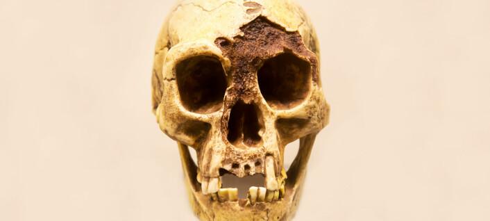 «Hobbit-mennesket» hadde svak kjeve, men tok det igjen med steinverktøy, tror forskere