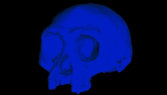 """Forskerne lagde en datamodell av skallen til <span class="""" italic"""" data-lab-italic_desktop=""""italic"""">Homo floresiensis</span>."""