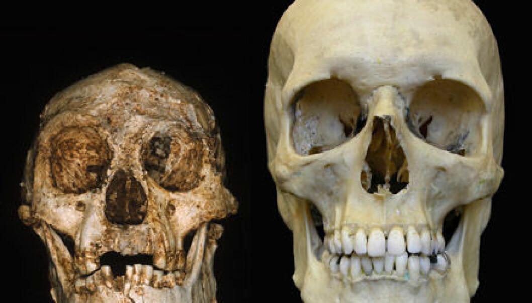 """""""Flores-skallen er liten, sammenliknet med moderne hodeskaller"""""""