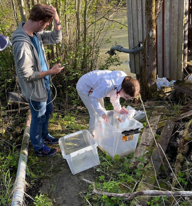 En gruppe studenter fra NTNU Gjøvik fikk i oppdrag å utvikle en algoritme for å registrere salamandere ved bruk av en app.